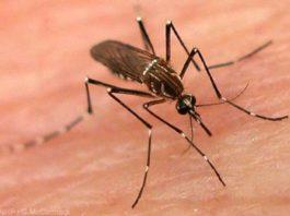Swine Flu, Dengue, Iqbal, Death, Swine Flu, Iqbal, SMS Hospital, Jaipur, Latest Medical News