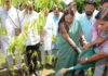 Chief Minister Raje made plantation in BJP office