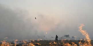 Government will monitor satellite on Parali burning in Punjab