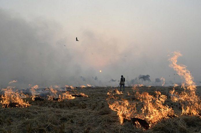 Government will monitor satellite on Parali burning in Punjab