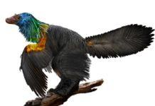 Rainbow-colored-dinosaur