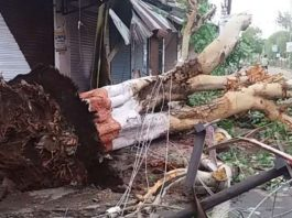 Rajasthan,storm, blind lied, twenty people, thousand, animal, bird, died