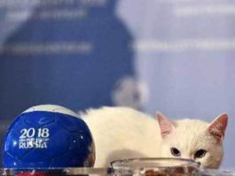FIFA World Cup, russia, won match, cat telling, will win, will lose