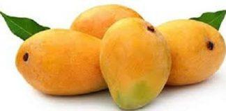Konkan, Alphonso mango, GI tag